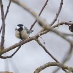 Aidons nos oiseaux à passer l'hiver